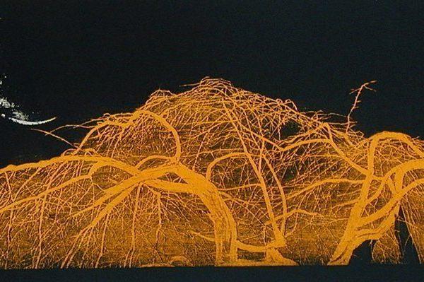 New Moon, Weeping Cherry Tree (yellow)