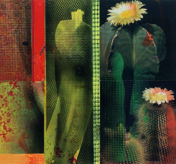 'Cacti Garden 1' by David Ferry