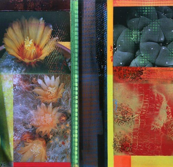 'Cacti Garden 10' by David Ferry