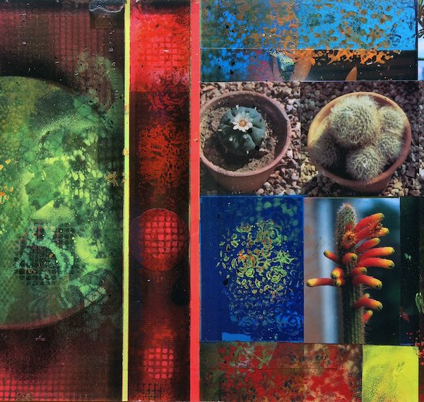 'Cacti Garden 12' by David Ferry