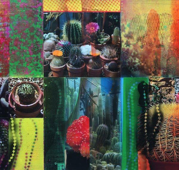 'Cacti Garden 13' by David Ferry