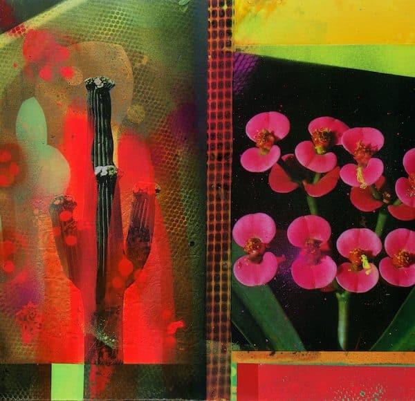 'Cacti Garden 14' by David Ferry