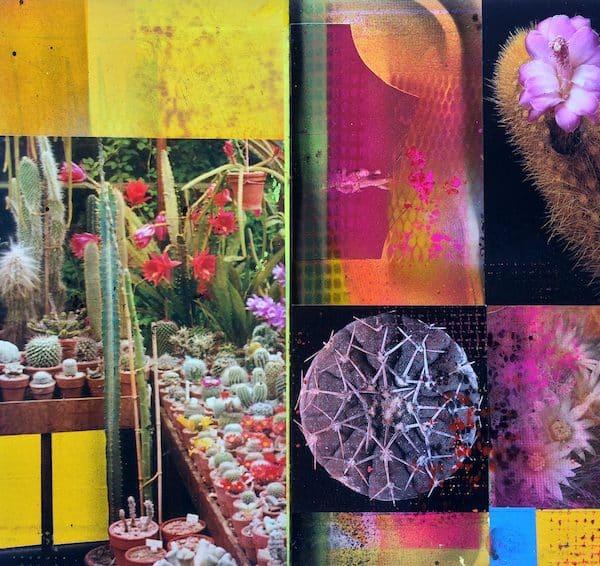 'Cacti Garden 15' by David Ferry