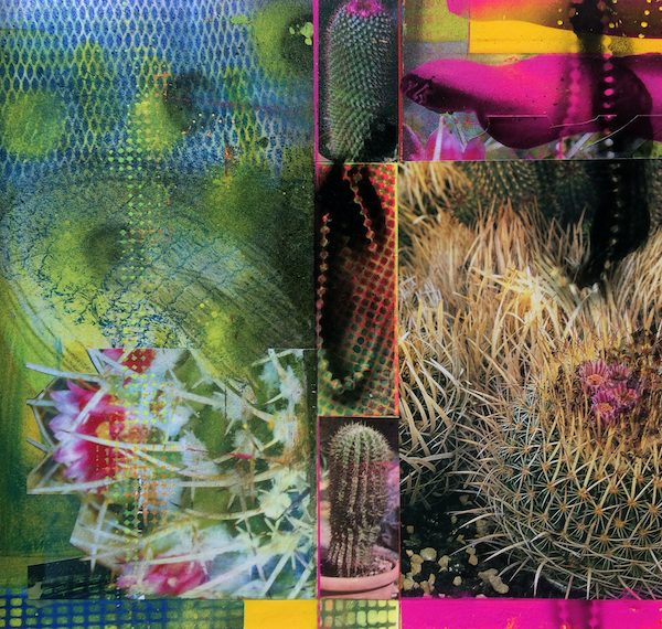 'Cacti Garden 16' by David Ferry