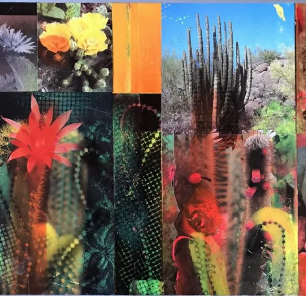'Cacti Garden 17' by David Ferry