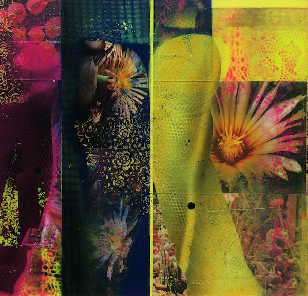 'Cacti Garden 2' by David Ferry