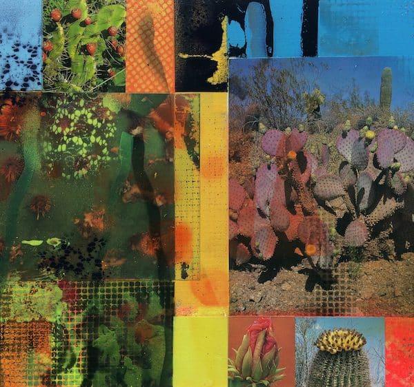 'Cacti Garden 4' by David Ferry