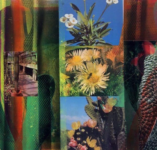 'Cacti Garden 5' by David Ferry