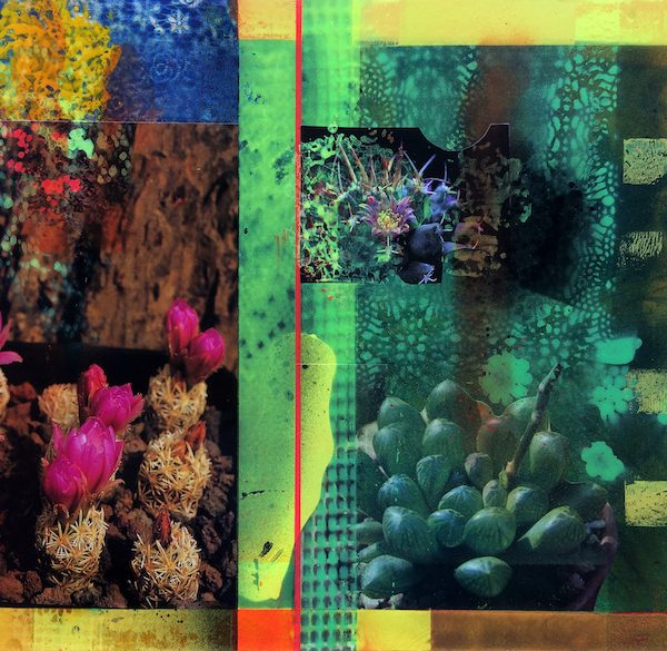 'Cacti Garden 6' by David Ferry