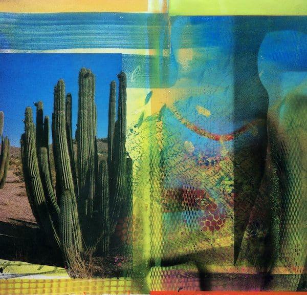 'Cacti Garden 7' by David Ferry