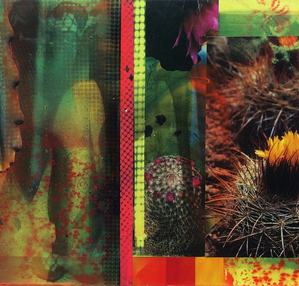 'Cacti Garden 9' by David Ferry