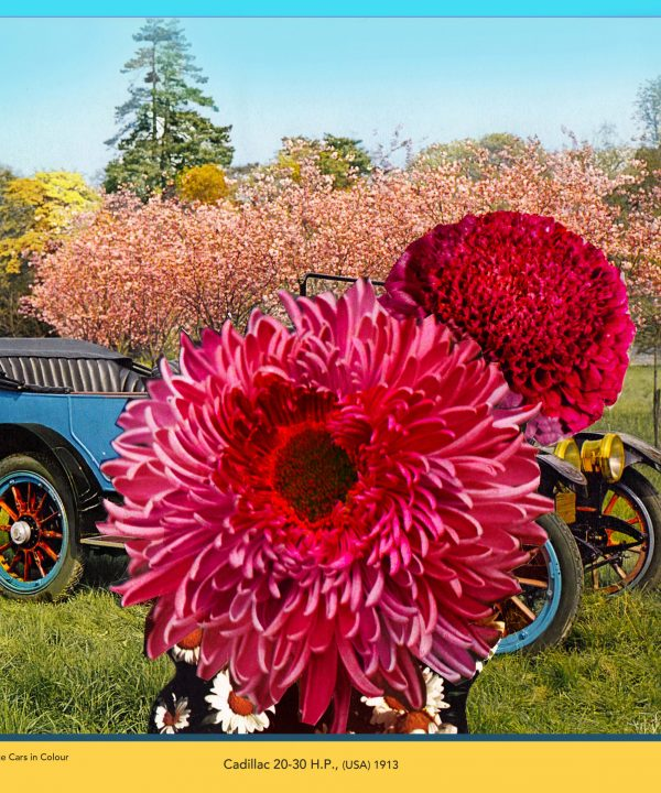 'Cadillac 20-30 HP' from 'Seasonal Veteran and Vintage Cars in Colour' by David Ferry