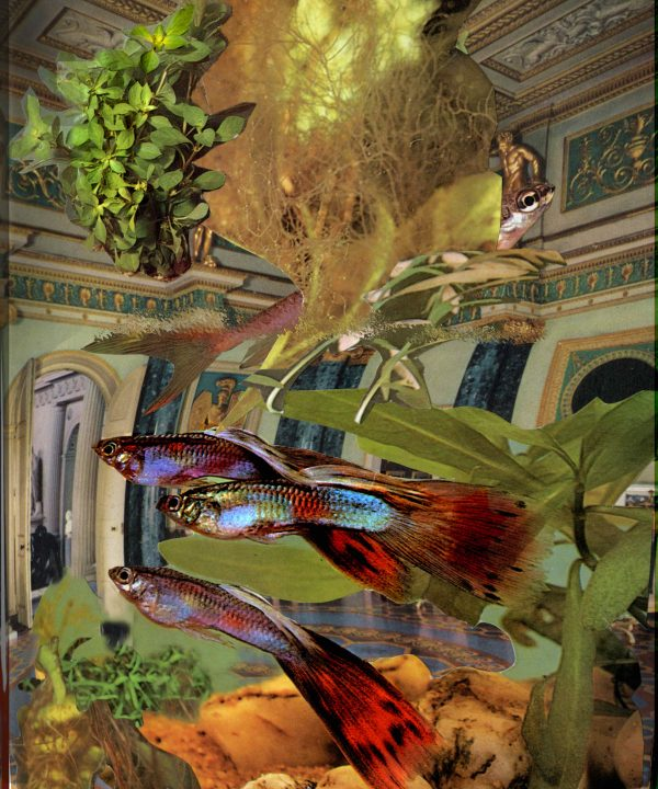 'The Aquarium, Syon House' by David Ferry